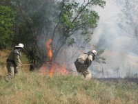 Спасатели около часа тушили на Хортице пожар