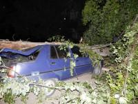 Владелец «Славуты», на которую упало дерево, будет судиться с коммунальщиками