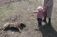 Бойцовская собака разорвала на глазах у детей дворняжку