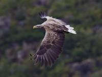 Запорожцев зовут понаблюдать за дикими птицами в подзорную трубу