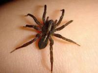 В Запорожской области мужчина скончался от укуса паука