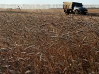 В Запорожской области засуха достигла критического уровня