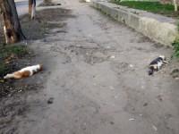 В Пологах неизвестные травят котов