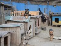Собачий приют остался без света: животных греют коврами и шубами