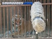 Рев запорожских тигров записала голливудская саунд-компания