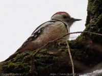 На Хортице сфотографировали редкую птицу
