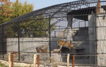 В зоопарке под Запорожьем для хищников построили новый дом (Фото)
