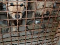 В Запорожской области в приюте замерзают собаки — не хватает будок