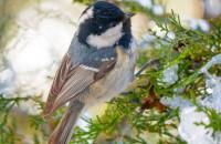 На Хортице засекли редкую птицу