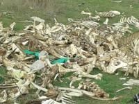 В Запорожской области возле жилых домов обнаружили гору костей (ФОТО)