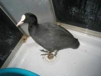 Фотофакт: Зоозащитница нашла на Металлургов редкую птицу