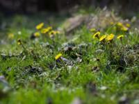 Весна в Запорожье: в сети делятся снимками распустившихся цветов