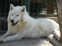 В бердянском зоопарке родили пони и волчата (Фото)