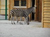 В бердянский зоопарк привезли зебр и лемуров из Чехии (ФОТО)