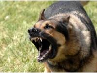 В запорожском селе соседский пес разгрыз таксу на глазах у ребенка