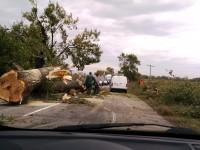 В Запорожской области огромное дерево рухнуло прямо на дорогу (Фото)