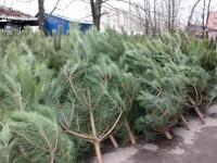 Стало известно, сколько стоят елки в Запорожье