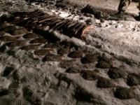 На запорожском курорте браконьеры наловили рыбы почти на полтора миллиона