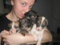 В Запорожье волонтеры спасли из водосточной трубы десяток щенков
