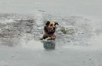 В Запорожской области спасли жизнь собаке, провалившейся под лед (видео)