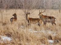 Обитатели Хортицы гибнут из-за морозов