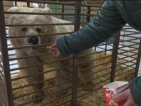 Под Запорожьем в зоопарке поселили медведицу, брошенную 7 лет назад циркачами
