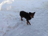В Запорожье охранник убил коллегу за пытки над животными (Фото)
