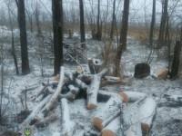 В Запорожье дачники вырубали деревья, чтобы обогреть дома