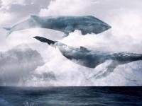Владимир Буряк поручил заняться проблемой «синих китов»