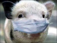 В Запорожской области от африканской чумы начали гибнуть свиньи
