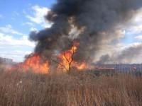 Масштабный пожар на Правом берегу уничтожил краснокнижных птиц (Фото)
