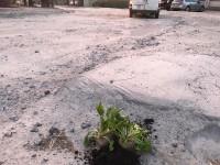 В Запорожье ямы на дорогах «залатали» буряком (Фото)