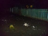 В Запорожской области на село напали волки (фото)
