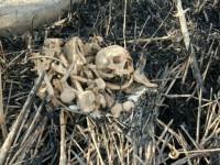 В Запорожье подростки во время прогулки обнаружили человечески кости