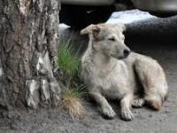 В Запорожской области бродячая собака укусила малышку за лицо