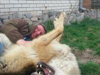 Запорожец спас волчонка после того, как тот остался без матери из-за браконьеров