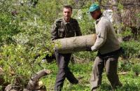 Коммунальщики продолжают убирать поваленные на прошлой неделе деревья