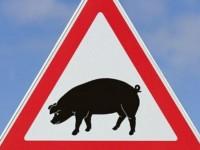 В Запорожской области запретили продажу свинины
