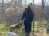 Фотофакт: на Бабурке выгуливают волка