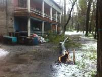 На Хортице падающее дерево зацепило мужчину