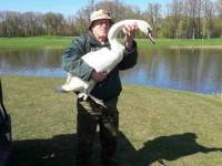 Спасенная в Запорожье лебедь обрела дом у бывшего президента