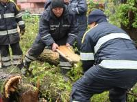 За сутки запорожские спасатели распилили и убрали больше сотни деревьев (Фото)