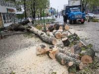 В запорожской мэрии решили пустить древесину упавших деревьев на благое дело
