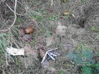 Под Запорожьем женщина нашла вместо грибов десяток гранат