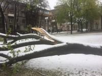 В Запорожье упали 400 деревьев – мэрия