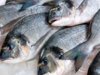 Две жительницы Запорожской области заразились смертельной болезнью, поев рыбы