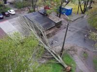 На запорожской Набережной рухнул тополь