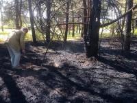 Фотофакт: На Хортице поджигатели устроили пожар