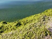 Мэр Кирилловки отказался рассказать, как борется с водорослями на побережье
