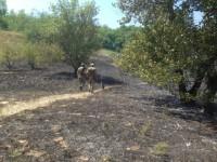 На Хортице пытались сжечь «Запорожскую Сечь»
